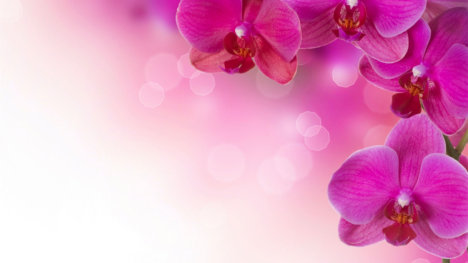 Background images of flowers. Flower backgrounds pink wallpaper