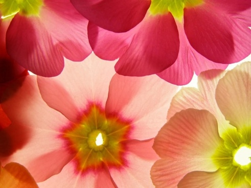 Background images of flowers. Free stock photos download