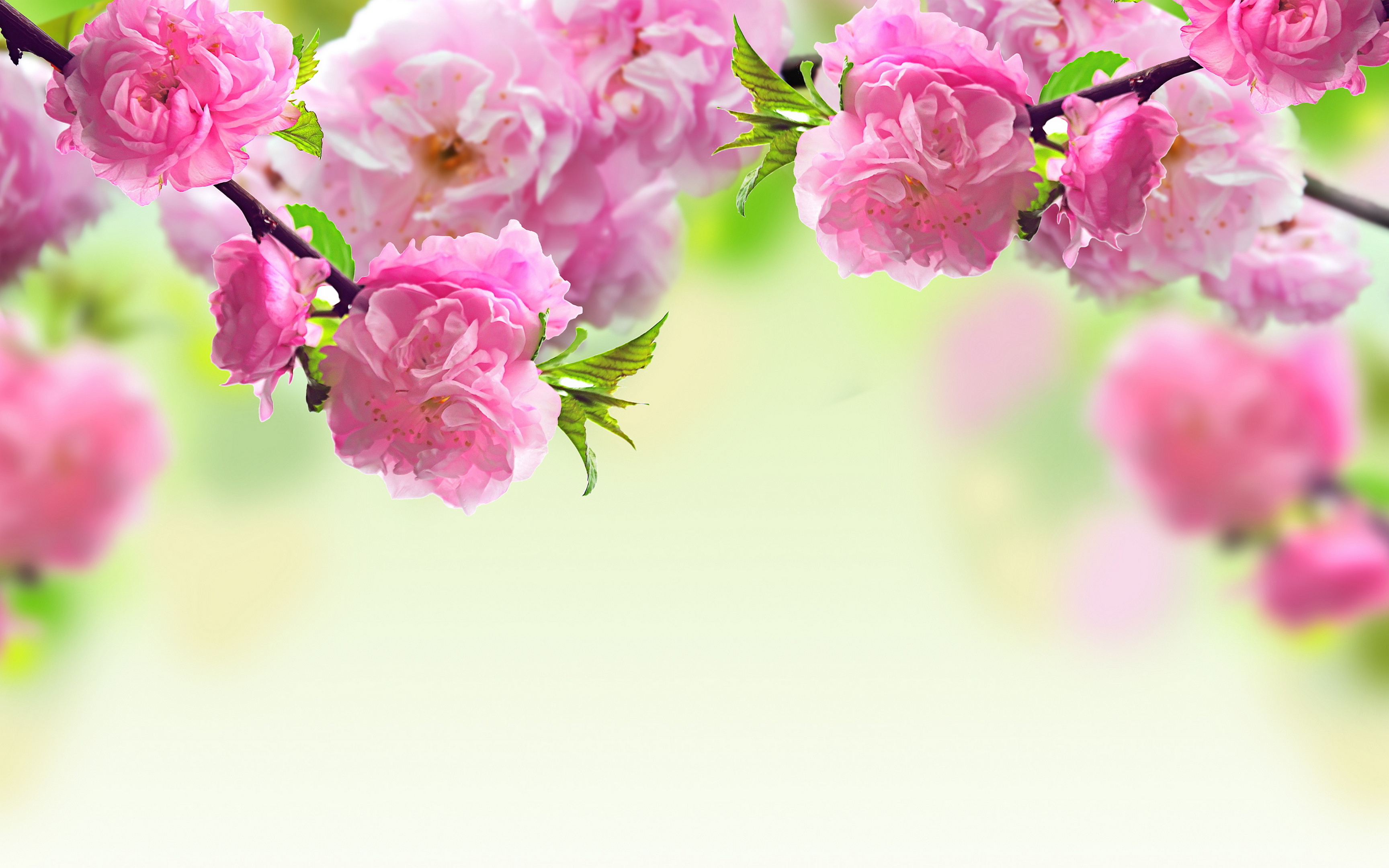 Spring Background free download | PixelsTalk.Net graphic library