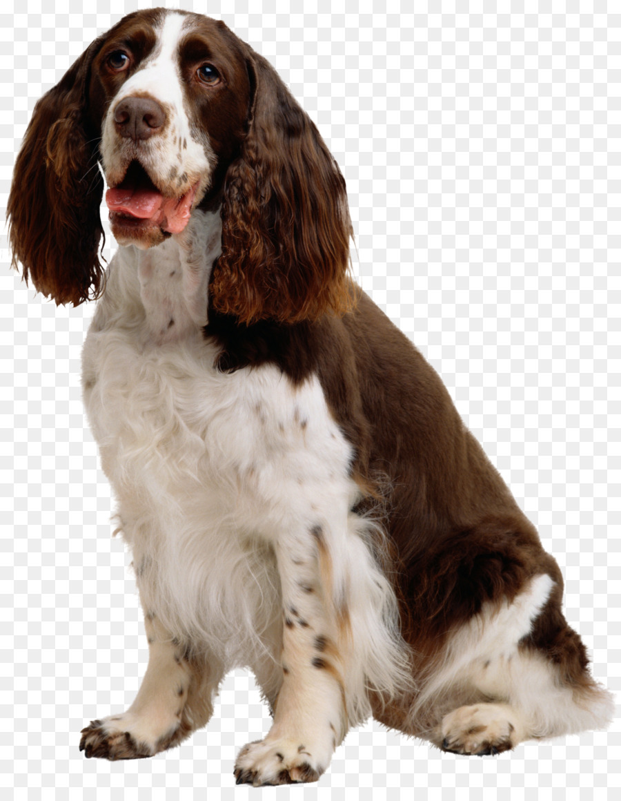 Background less springer spaniel clipart png library stock Dog And Cat png download - 2357*2997 - Free Transparent English ... png library stock