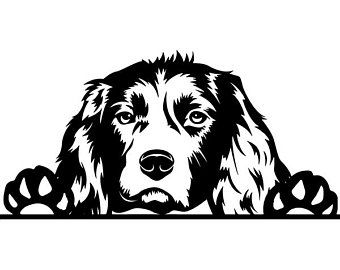 Background less springer spaniel clipart picture freeuse library Image result for line drawing of english springer spaniel | Just for ... picture freeuse library