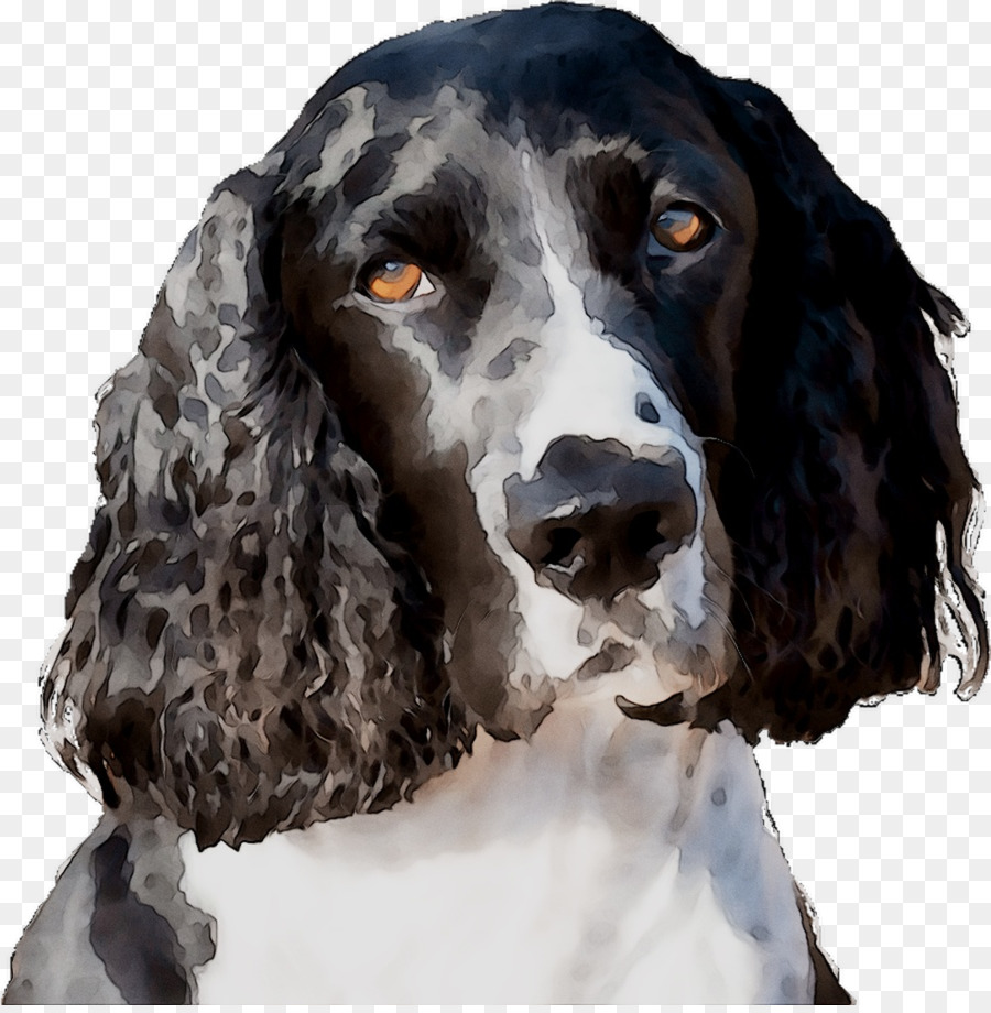 Background less springer spaniel clipart picture stock Cartoon Dog png download - 1088*1104 - Free Transparent Field ... picture stock