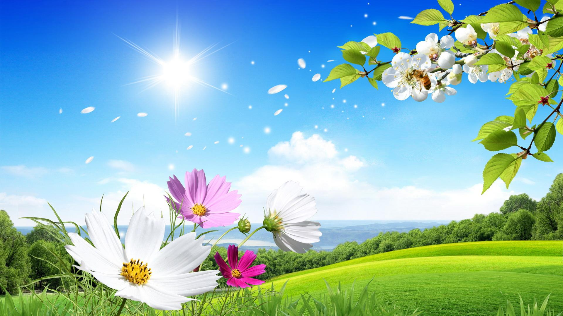 Background wallpaper flowers clip free library 1000+ images about Flowers on Pinterest | Beautiful, Summer ... clip free library