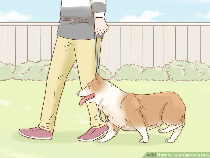 Bad dog dog house clipart svg library How to Take Care of a Dog (with Pictures) - wikiHow svg library