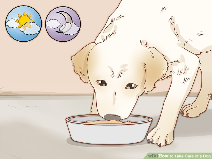 Bad dog dog house clipart image free How to Take Care of a Dog (with Pictures) - wikiHow image free