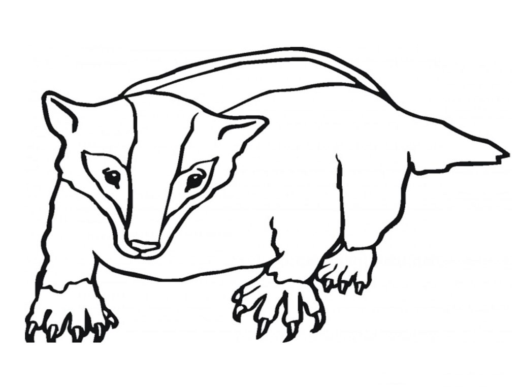 Badger clipart black and white png black and white stock Badger Black And White Clipart | Brydens Xpress png black and white stock