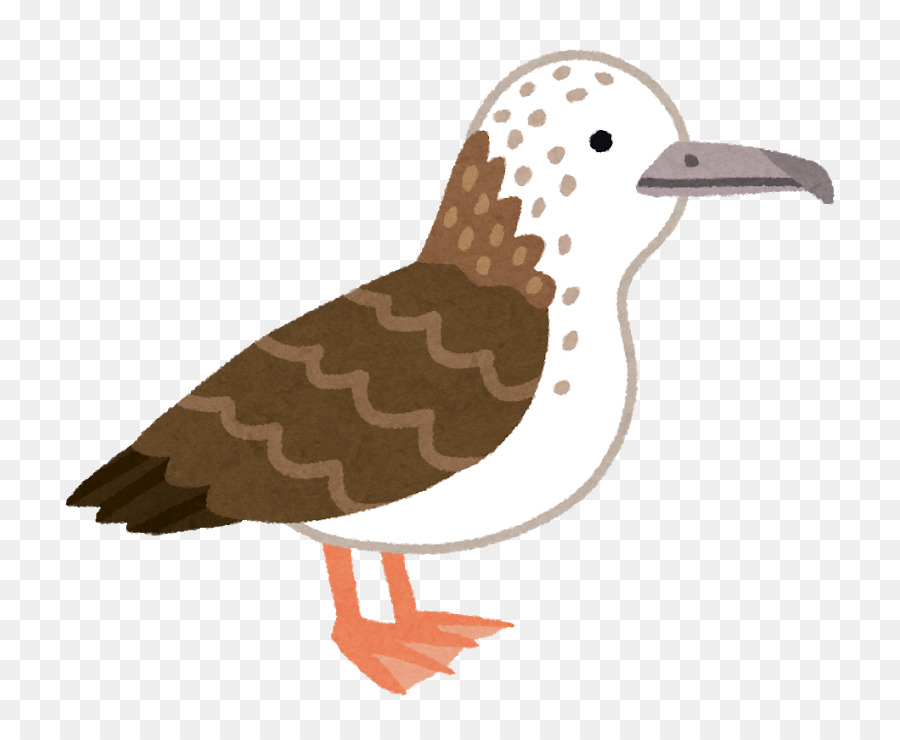 Duck Cartoon png download - 800*740 - Free Transparent Duck png ... banner free
