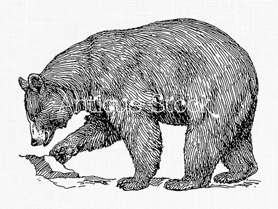 Balck bear drawing clipart png royalty free library Clipart Animal Line Art \