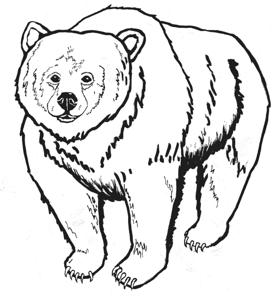 Bear black and white clipart picture royalty free library Free Bear Drawing Cliparts, Download Free Clip Art, Free Clip Art on ... picture royalty free library