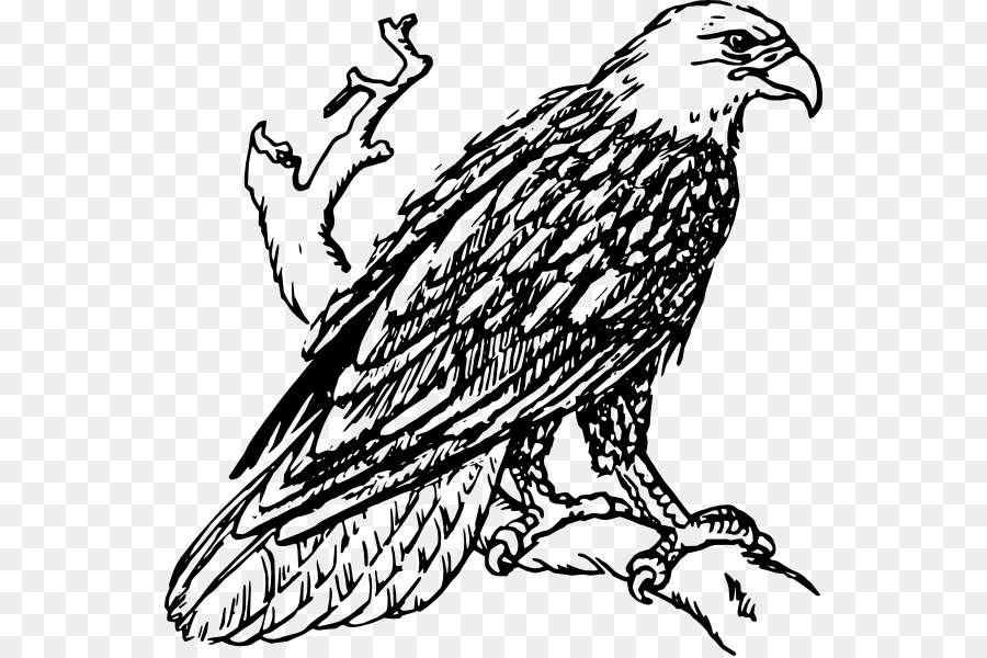 Bald black & white clipart png freeuse Book Black And White clipart - Eagle, Bird, Tree, transparent clip art png freeuse