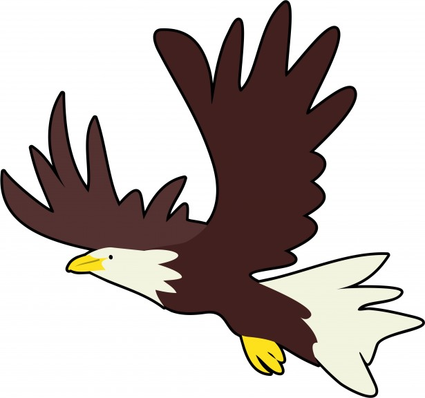 Bald eagle real pictures clipart