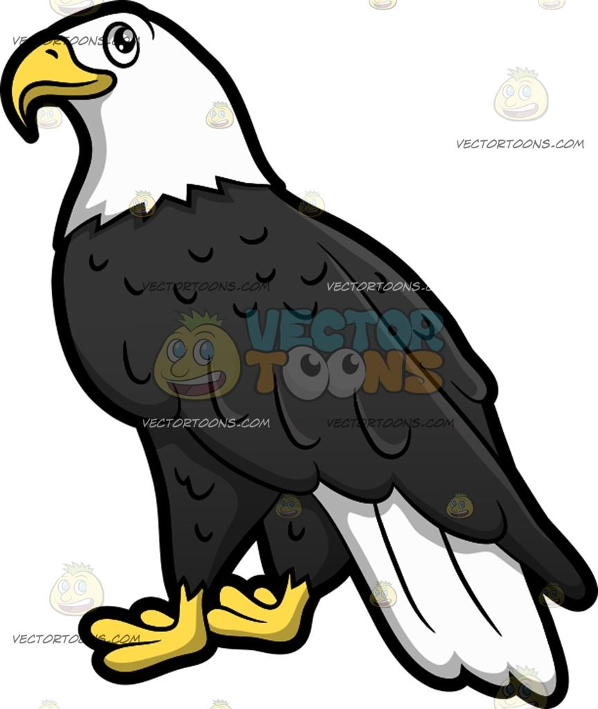 Bird beaks and feet clipart image library A Bald Eagle : A bird with white and black feathers yellow beak and ... image library