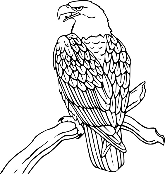 Bald eagle real pictures clipart clip Bald Eagle clip art Free vector in Open office drawing svg ( .svg ... clip
