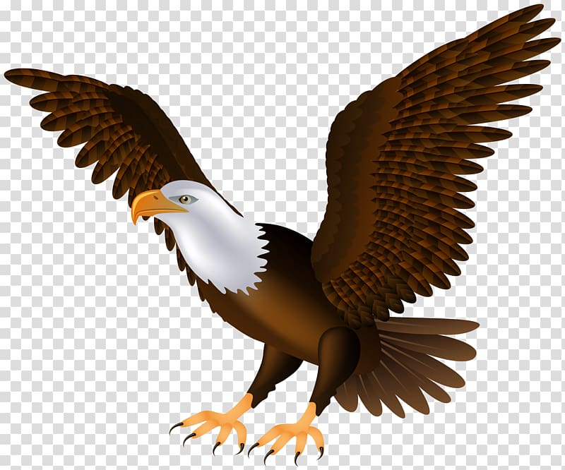 Bald eagle real pictures clipart clip black and white library Bald Eagle Bird , eagle transparent background PNG clipart | HiClipart clip black and white library
