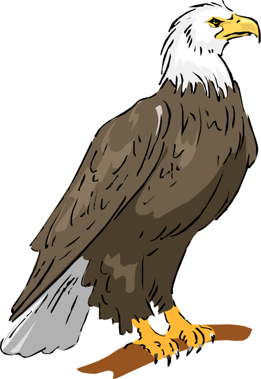 Bald eagle real pictures clipart banner library stock Bald eagle clipart clipart images gallery for free download | MyReal ... banner library stock