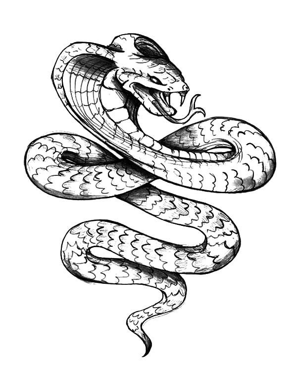 Ball python clipart black and white png freeuse Ball Python Drawing   Free download best Ball Python Drawing on ... png freeuse