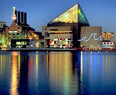 Baltimore aqaruim clipart image library download 82 Best NATIONAL AQUARIUM IN BALTIMORE images in 2019 | Baltimore ... image library download