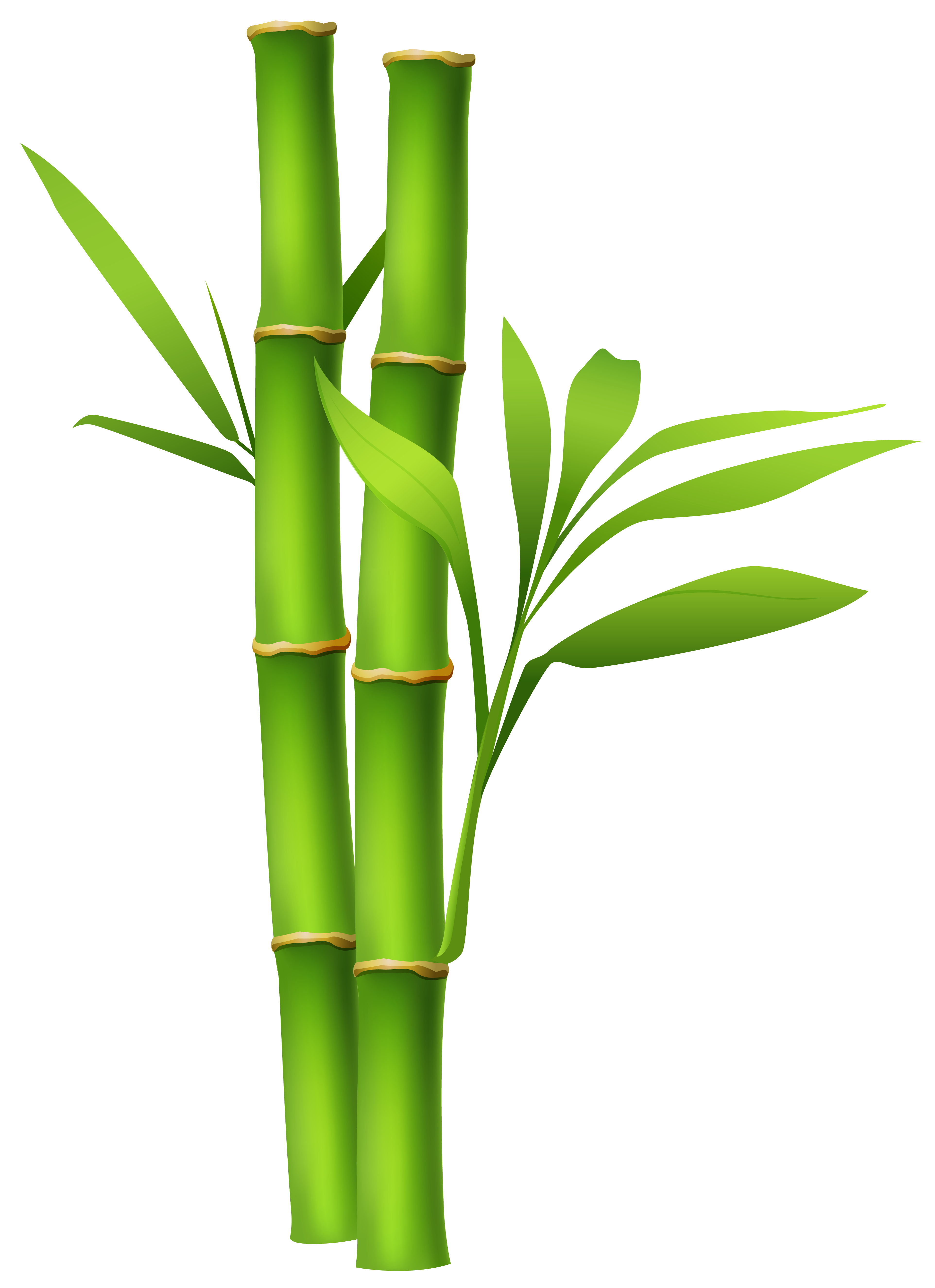 Bamboo clipart money picture library library Pin by Christopher Bruce on Logo Creations | Pinterest | Logo creation picture library library