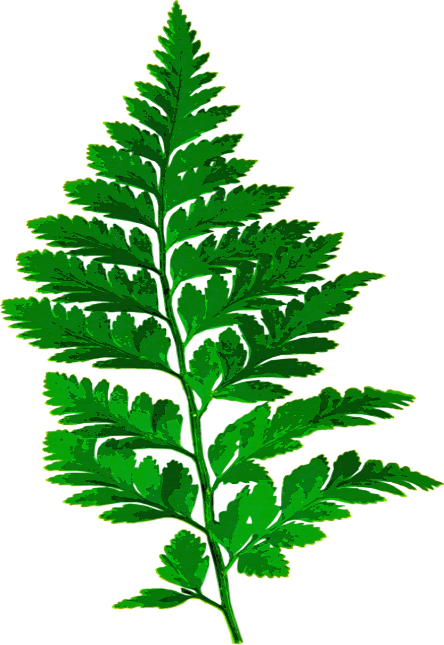 Bamboo house forest clipart clipart freeuse stock Forest, Fern Leaf Nature Green Leaves Plant Forest #forest, #fern ... clipart freeuse stock
