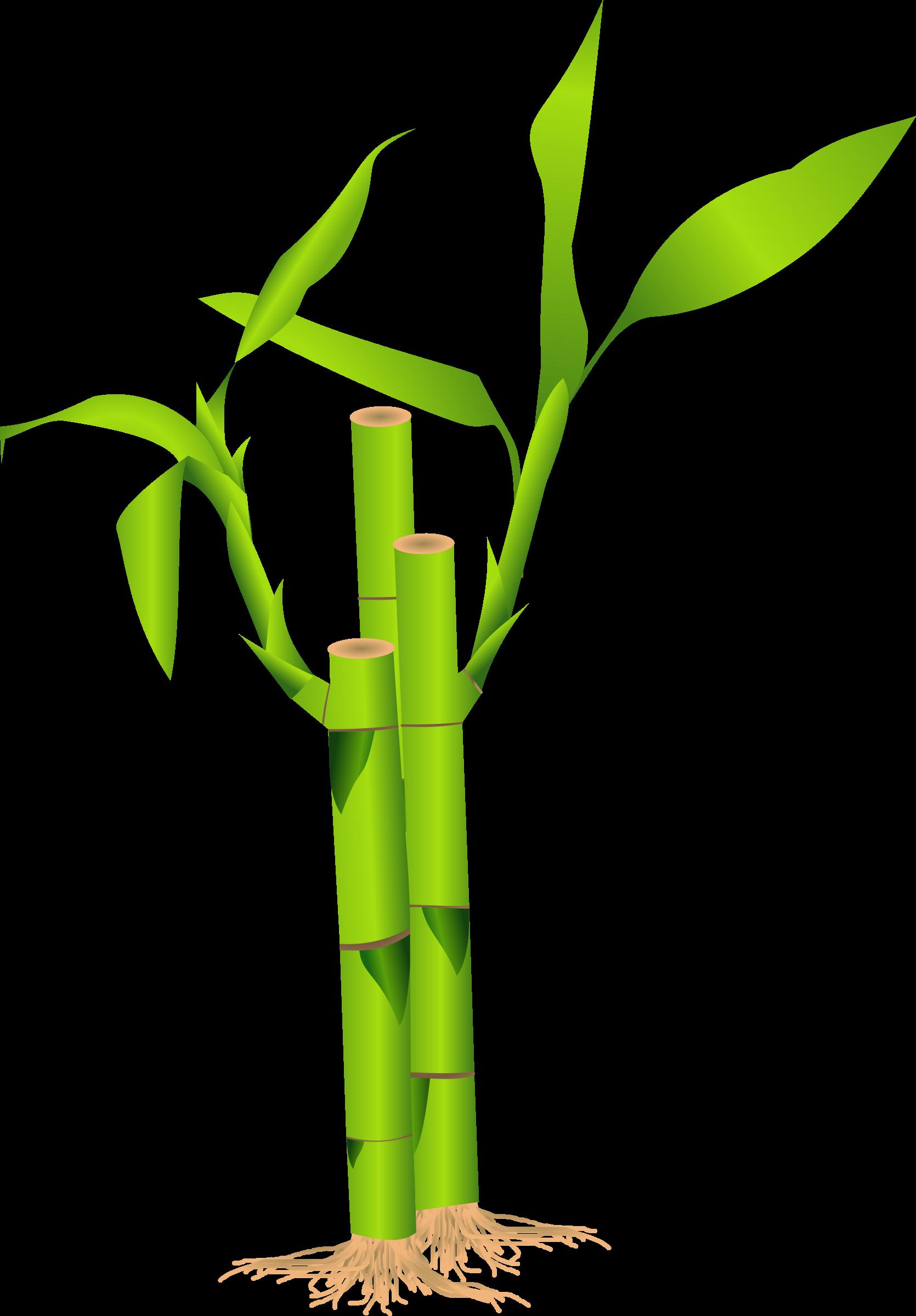 Bamboo tree clipart stock Bamboo Clipart stock