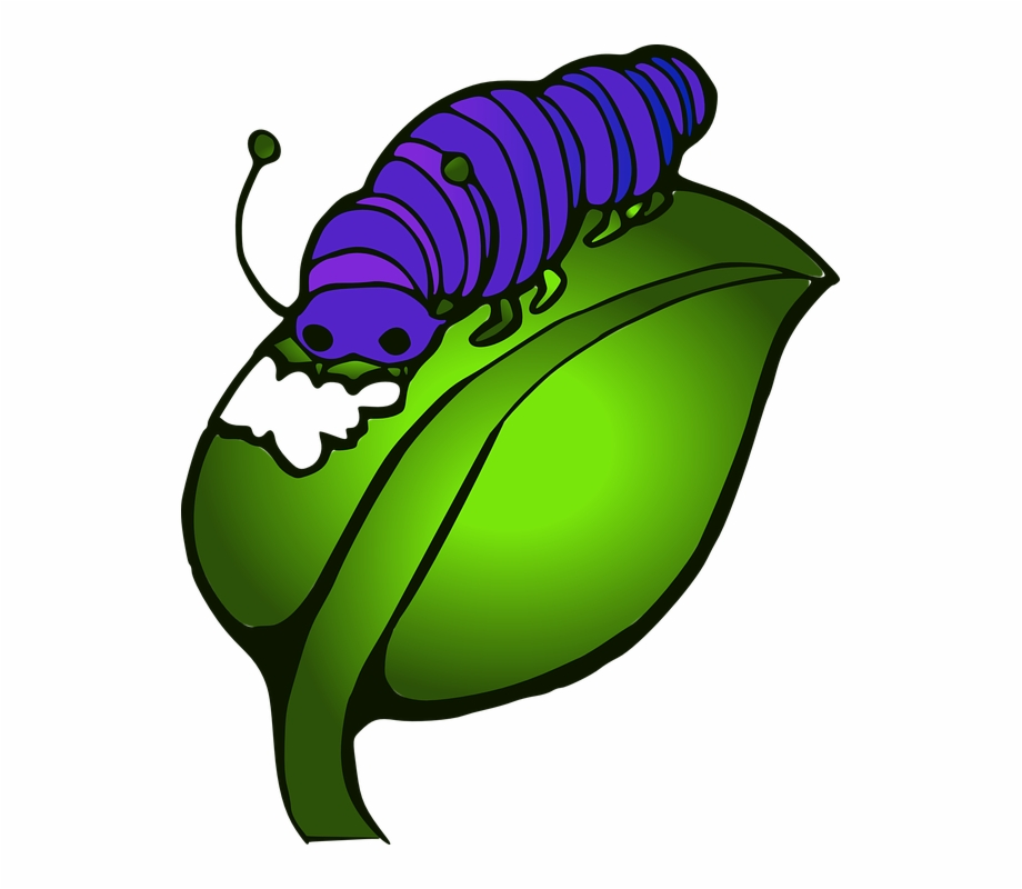 Banana hungry caterpillar clipart graphic freeuse Caterpillar Eating Leaves Clipart, Transparent Png Download For Free ... graphic freeuse