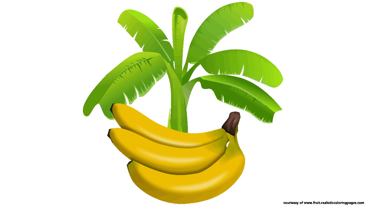 Banana tree clipart vector black and white stock 30 Amazing Look Banana Clipart Download It For Free - Fruit Names ... vector black and white stock