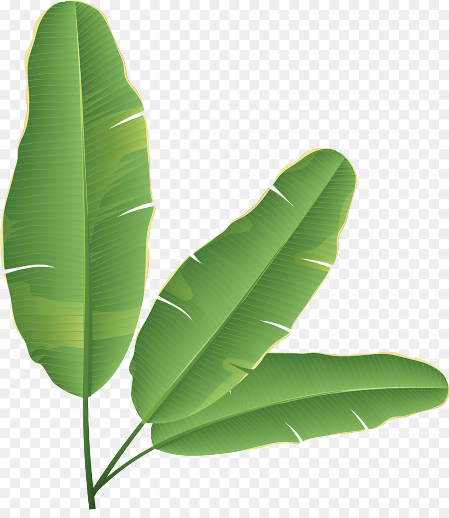 Banana tree leaves clipart graphic free library Banana Leaf Clipart png download - 1021*1162 - Free Transparent ... graphic free library