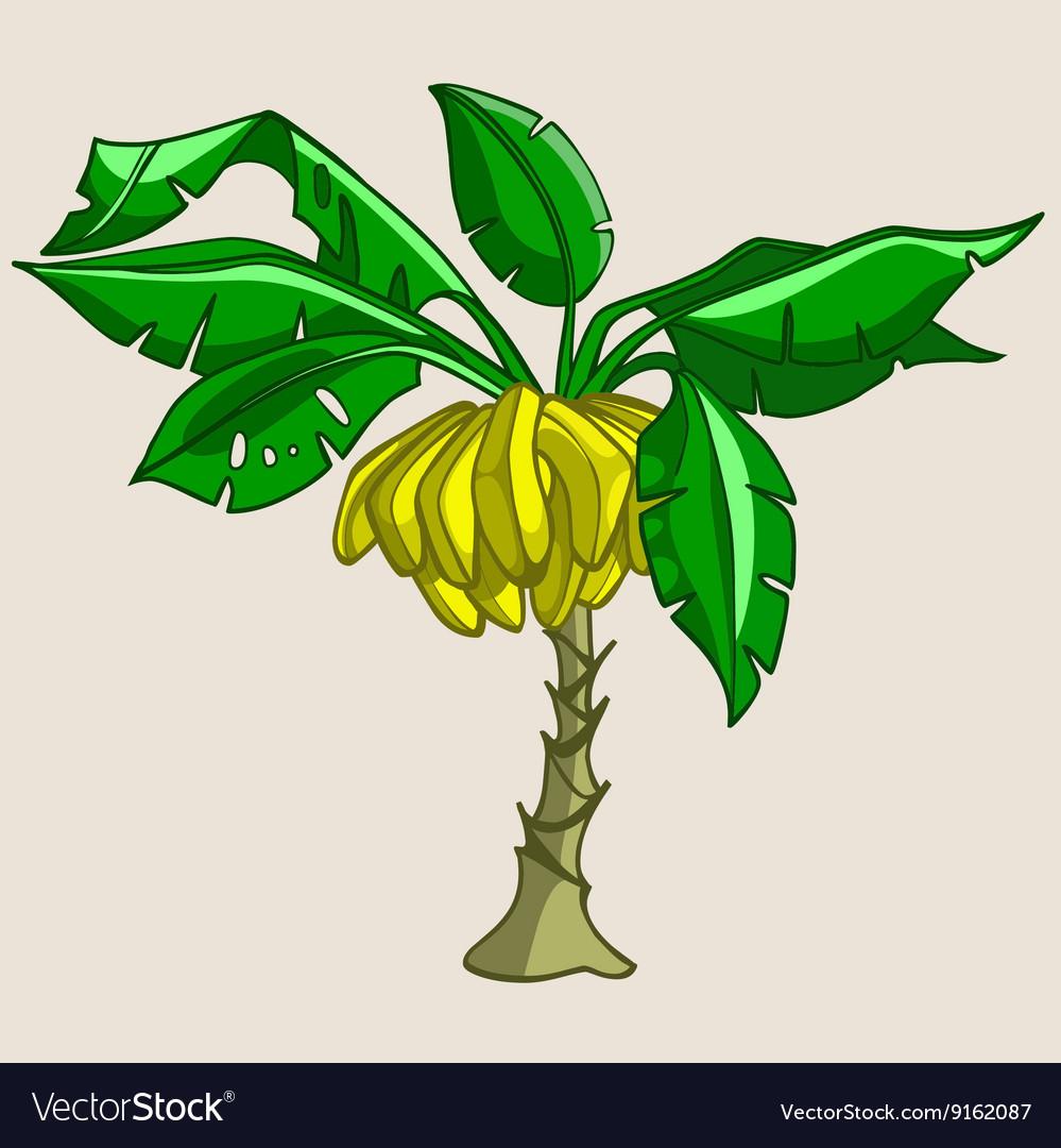 Banana tree vector clipart clip freeuse stock Cartoon banana tree with bananas clip freeuse stock
