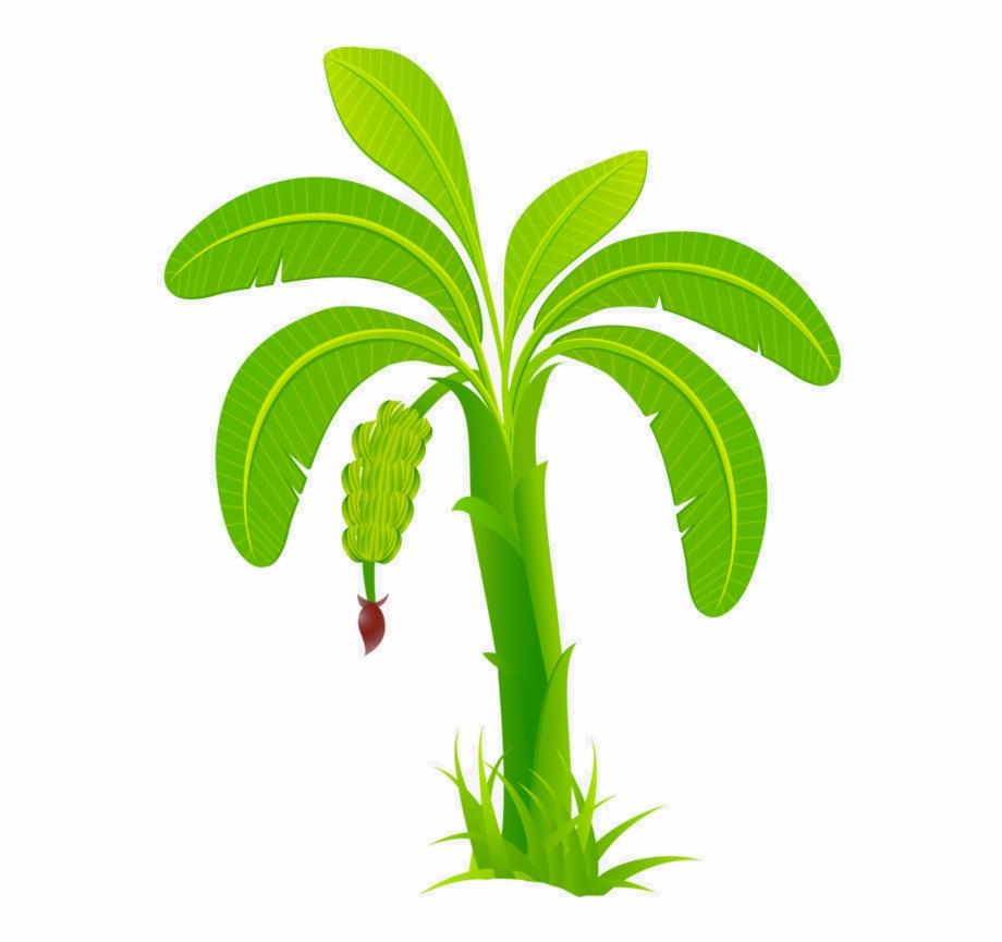 Banana tree vector clipart image library download Banana Tree Vector Png {#4935135} - Pngtube image library download