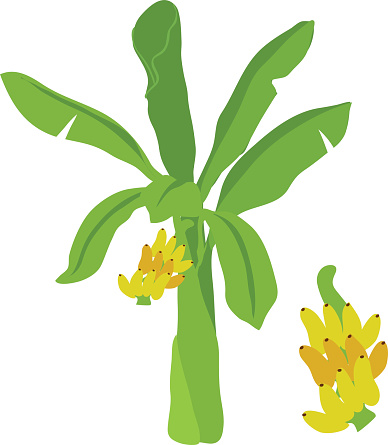 Banana trees pictures clipart banner free download Free Banana Plant Cliparts, Download Free Clip Art, Free Clip Art on ... banner free download