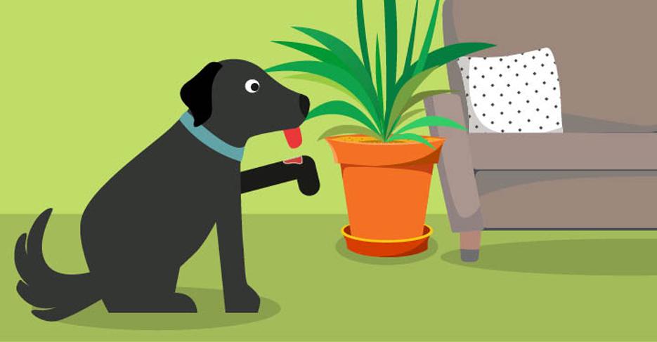 Bandage dog leg cartoon clipart image black and white stock Lick Granuloma: Why You Shouldn\'t Ignore Obsessive Licking image black and white stock