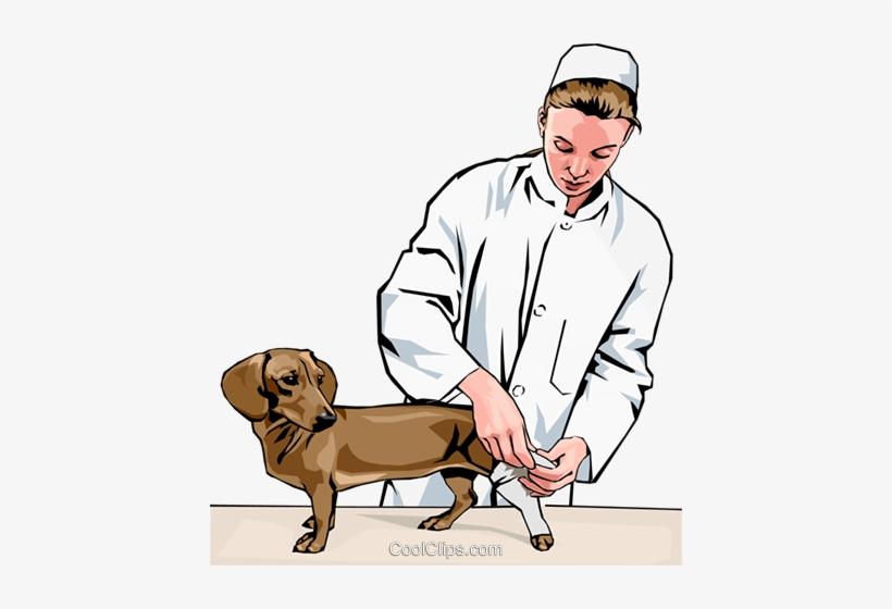 Bandage dog leg cartoon clipart