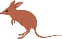 Clipart bandicoot svg free Search Results for bandicoot - Clip Art - Pictures - Graphics ... svg free