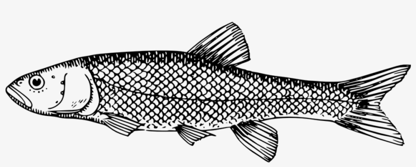 Clipart bangus clip transparent download Black And White Fish Images - Milkfish Clipart Black And White ... clip transparent download