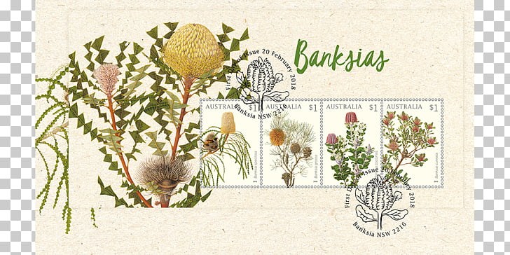 Banksia clipart free 27 banksia PNG cliparts for free download | UIHere free