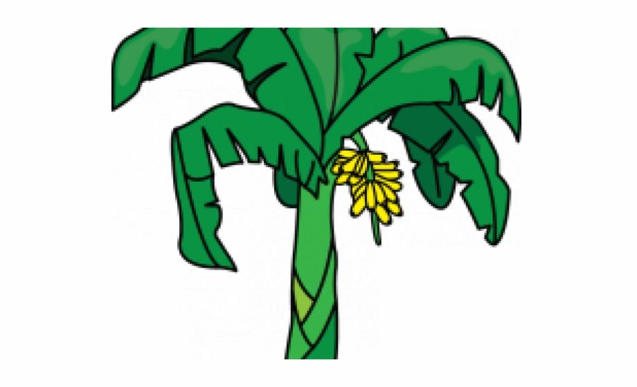Bannana trees clipart picture free Banana Clipart Banana Tree - Drawing - banana tree png, Free PNG ... picture free