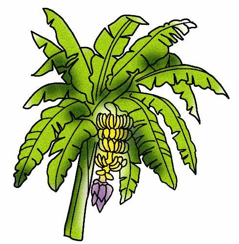 Bannana trees clipart jpg free library Free Banana Plant Cliparts, Download Free Clip Art, Free Clip Art on ... jpg free library