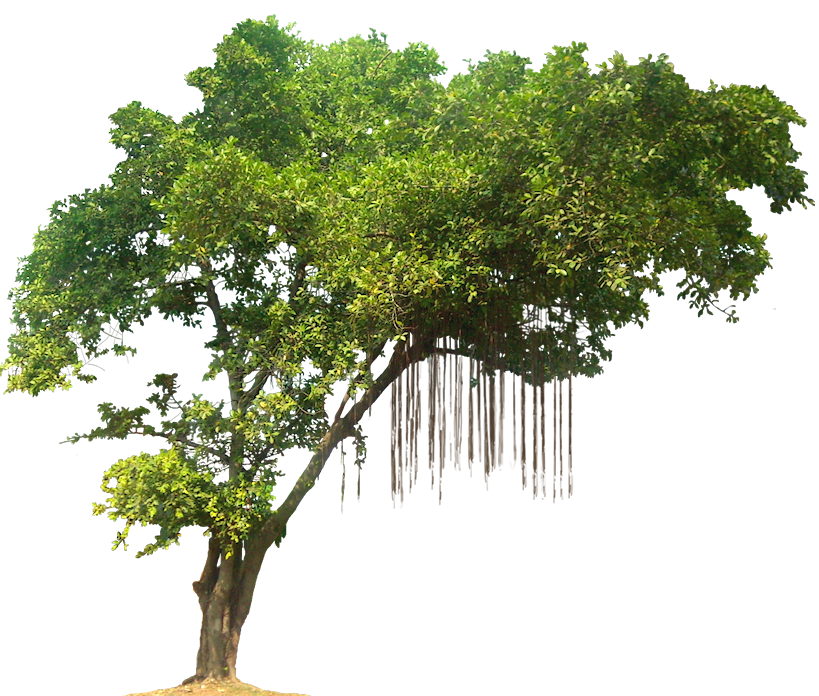 Banyan tree clipart clip freeuse small banyan tree - Google Search | Tattoos and Piercings ... clip freeuse