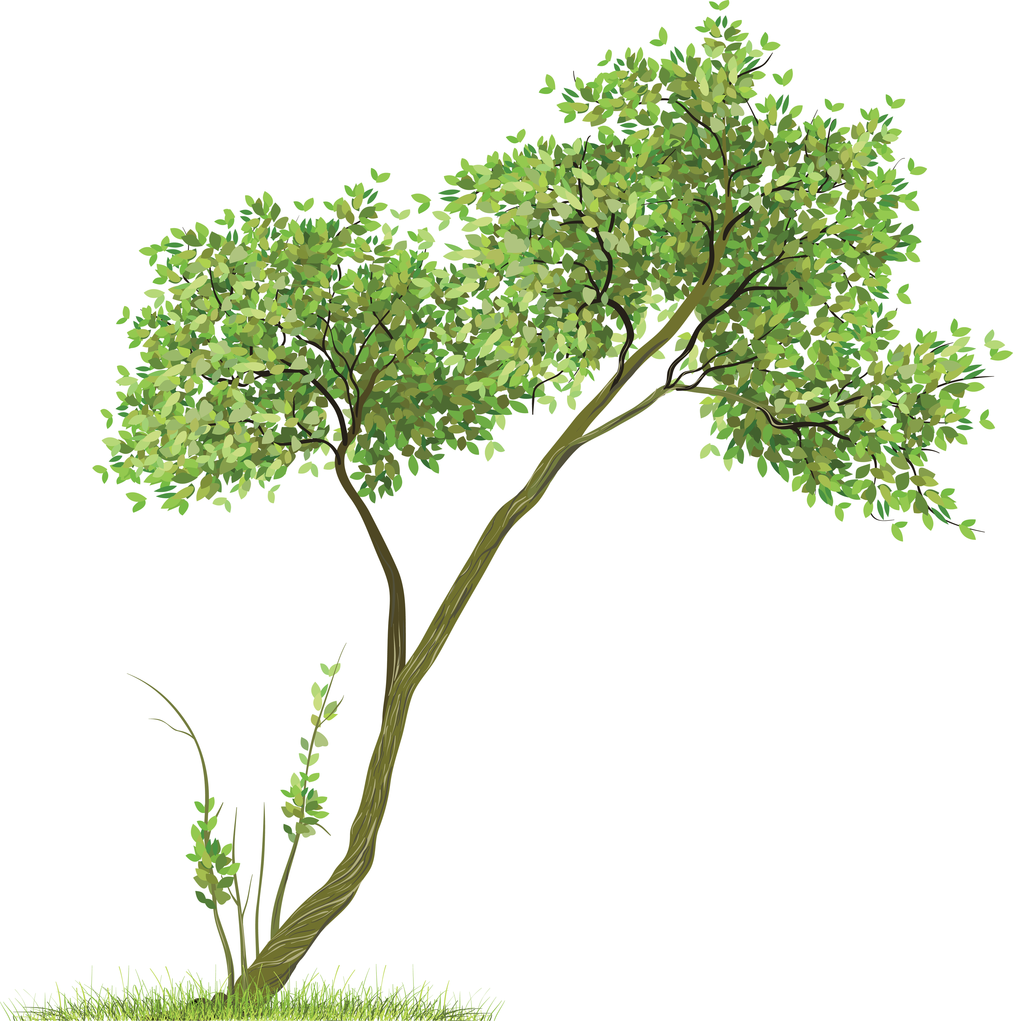 Banyan tree clipart jpg library download Download TREE Free PNG transparent image and clipart jpg library download