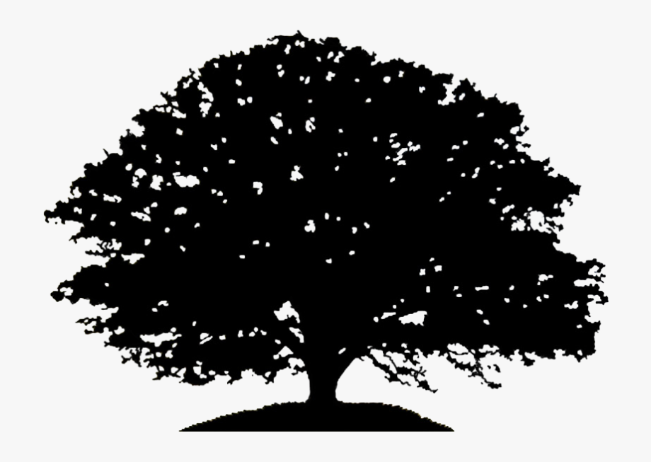 Bare oak tree clipart black and white png library Pin Oak Tree Clipart Black And White - First Word Of Justice #16602 ... png library