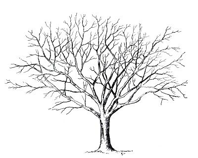 Wispy tree clipart graphic free stock Best Tree Clipart Black And White #18982 - Clipartion.com | vbs ... graphic free stock