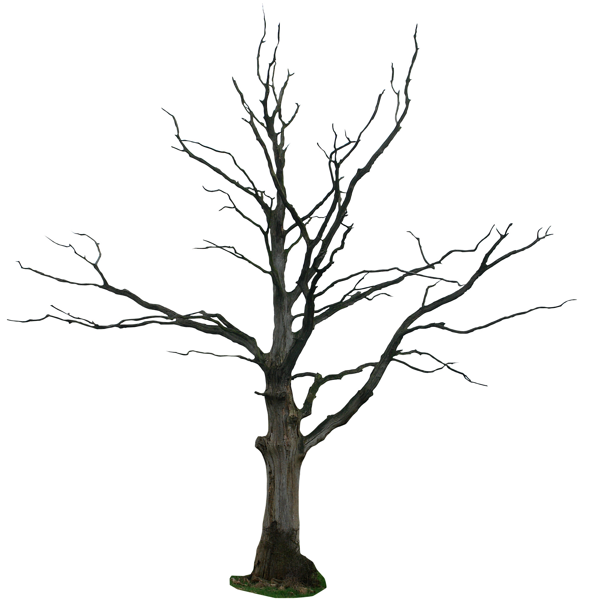 Clipart bare tree graphic royalty free stock Dead-tree Cartoon Clipart - Clipart Kid | trees | Pinterest ... graphic royalty free stock