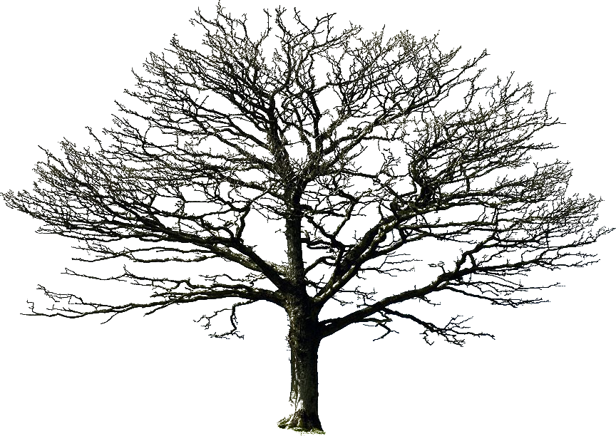 Bare tree black and white clipart vector royalty free bare tree PNG by =DoloresDevelde on deviantART | PNG files for ... vector royalty free