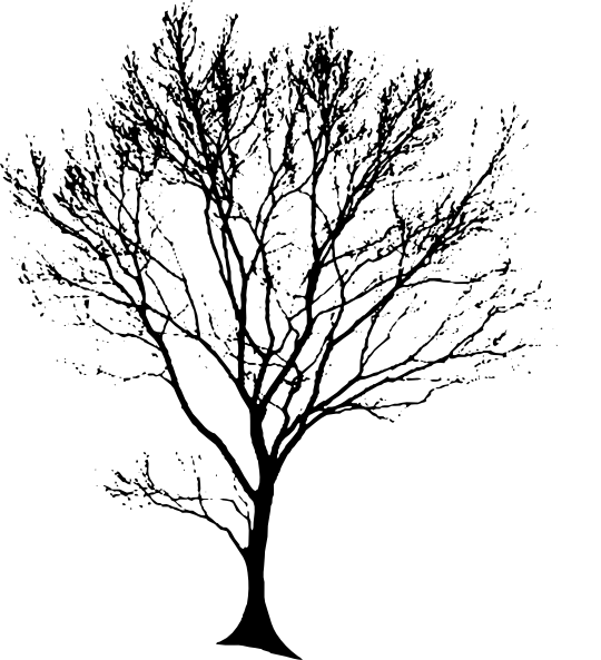 Tree Trunk Line Drawing at GetDrawings.com | Free for personal use ... jpg transparent library
