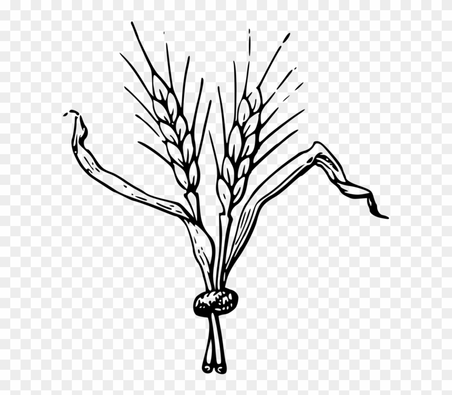 Barley images clipart