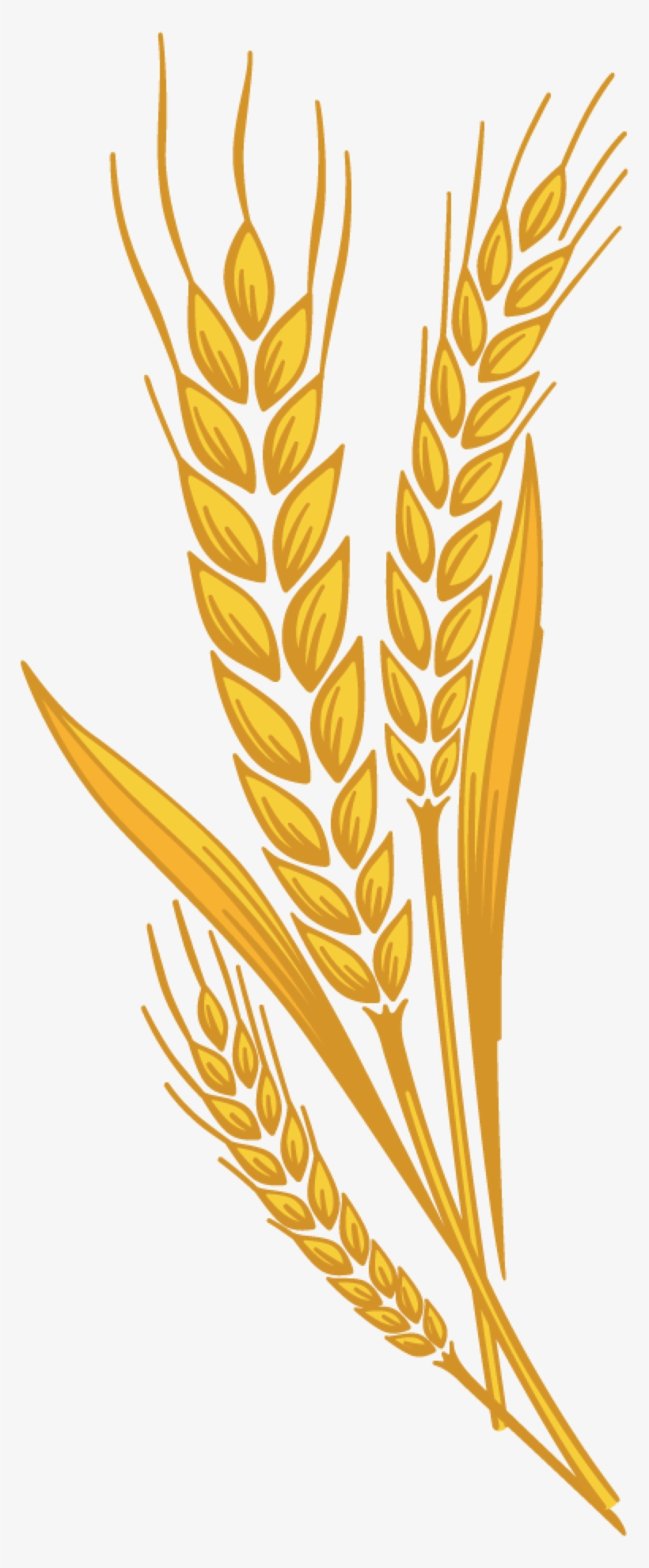 Wheat spike clipart png library library Svg Freeuse Library Barley Vector Spike Wheat - Wheat Spike Clipart ... png library library