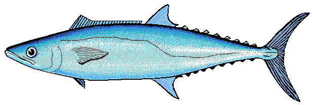 Barracuda images clipart banner free library Barracuda clipart » Clipart Portal banner free library