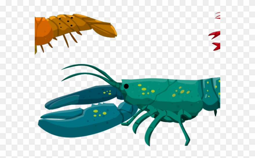 Barracuda images clipart png transparent stock Barracuda Clipart Spiny Lobster - Png Download (#2599846) - PinClipart png transparent stock