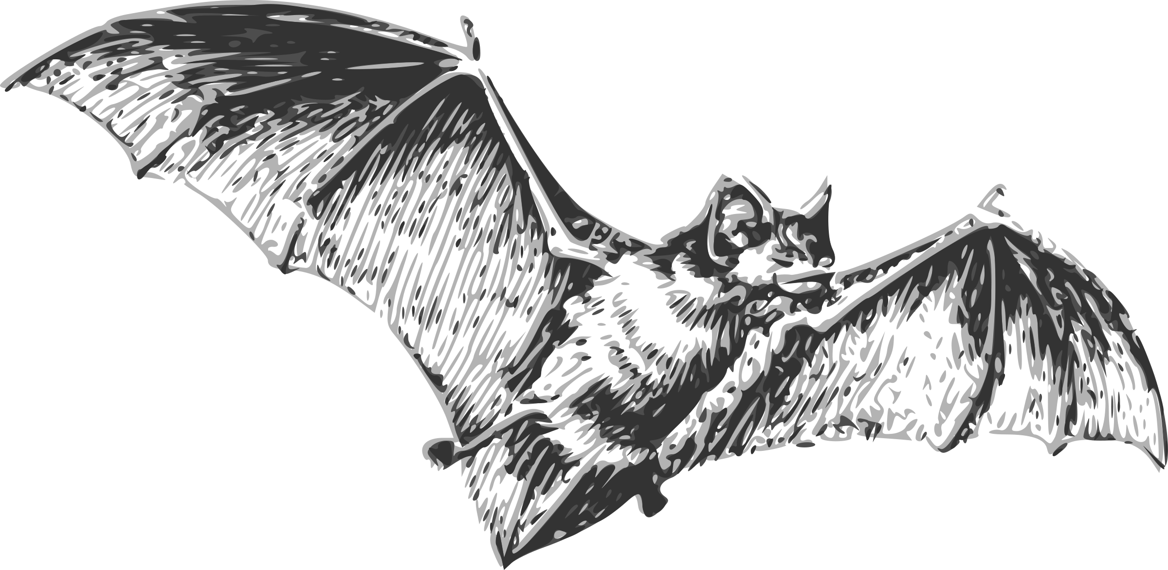 Baseball bat black and white clipart freeuse Realistic clipart bat ~ Frames ~ Illustrations ~ HD images ~ Photo ... freeuse