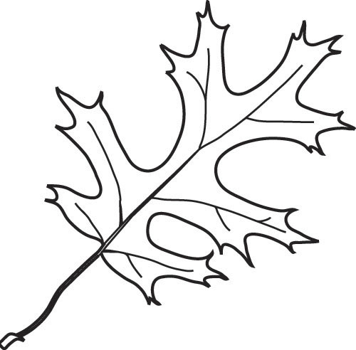 Basic black and white oak leaf clipart clip free stock White Oak Leaf Drawing at PaintingValley.com   Explore collection of ... clip free stock